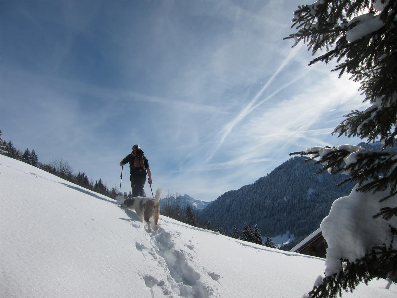 Activiteiten - Sneeuwwandelen met Loebas