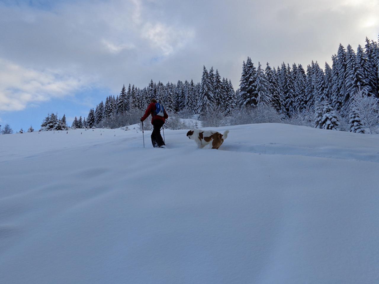 Activiteiten - Sneeuwwandelen