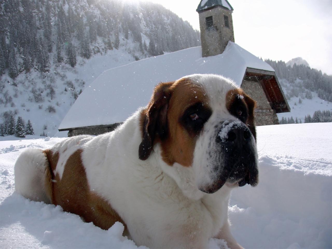 Loebas - bij Ubine in de sneeuw