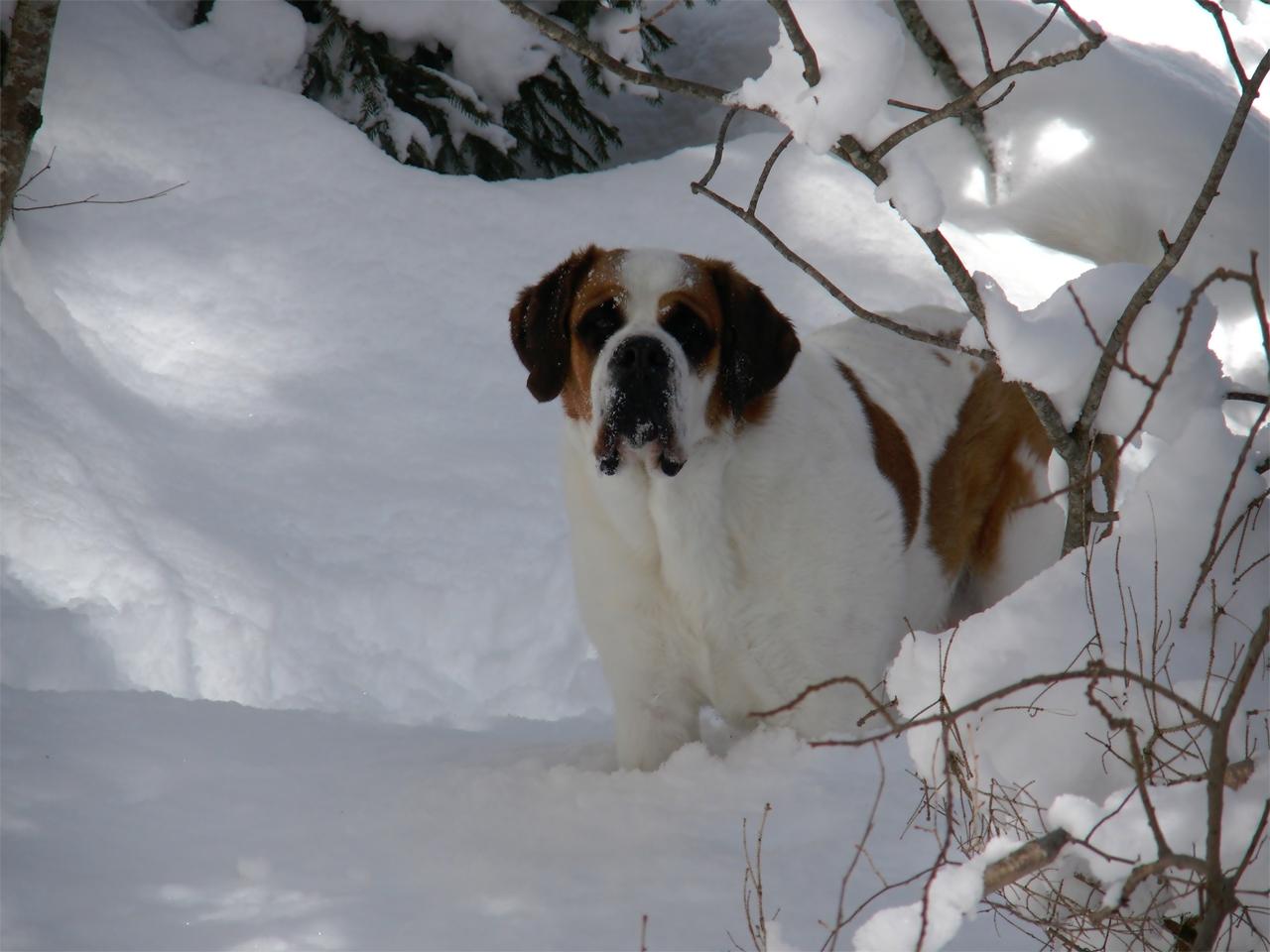 Loebas - in de sneeuw