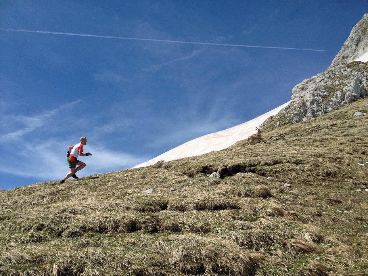 Trailrunning - Een berggeit bijhouden
